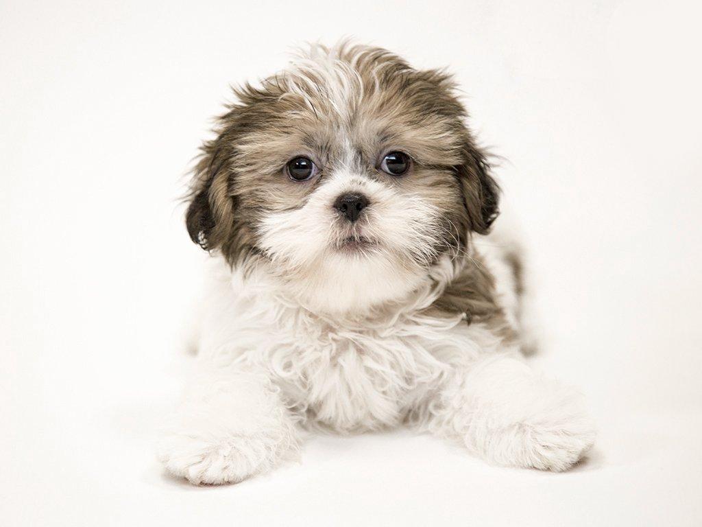 Petland Kennesaw Puppies Blog