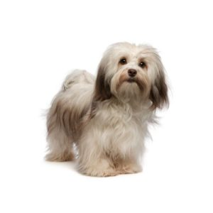 Popular Dog Breeds - Petland