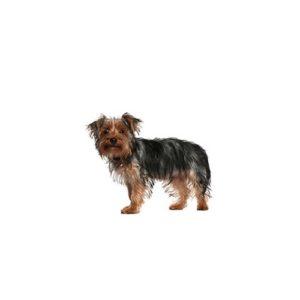 Popular Dog Breeds - Petland
