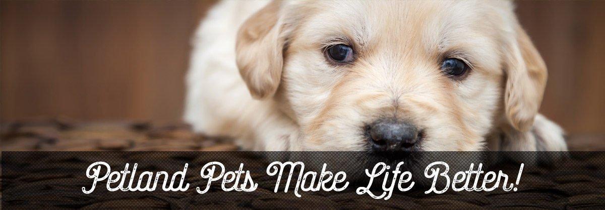 Petland puppy care