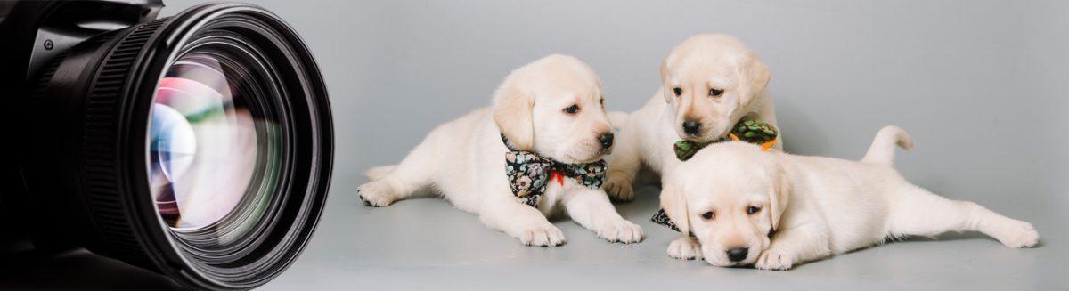 Puppy Photo Gallery Petland Lewis Center Columbus Ohio